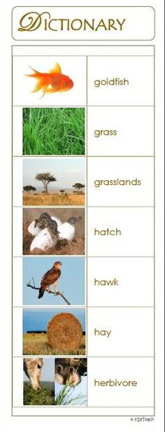 """Animal Dictionary & Portable Word Wall:  175 pictures with single-word definitions. """"A picture is worth a thousand words!""""  Great for animal unit studies (Report of Information)."""