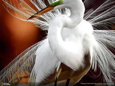 The 35 Most Spectacular Wildlife Photos From The National Geographic Photo Contest the national, nation geograph, national geographic, photographi natur, big bird, feather, amaz anim, animal photos, amaz creatur