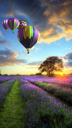 Hot Air Balloon over Lavender Fields in France