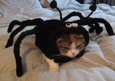 13 Pets That Never Want to Play Halloween Dress-Up Again @Anna Totten Totten Totten McClain @Tori Sdao Sdao Sdao Smith @Erin B B B Fitl