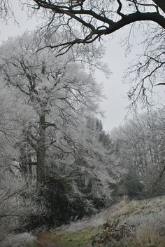 beauti natur, hoar frost, winter wonderland, trees, tree magic, place ive, homes, pools