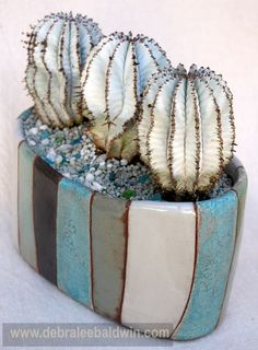 Euphorbia polygona in an Esther pot.
