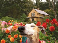 Stop and smell the flowers! Love this shot.