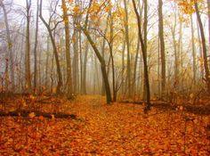 patrick park, michiana rock, autumn in indiana, autumn splendor, south bend