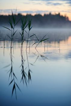 Midsummer in Finland: feeling when you are swimming in clear watered lake and it's perfectly silent.