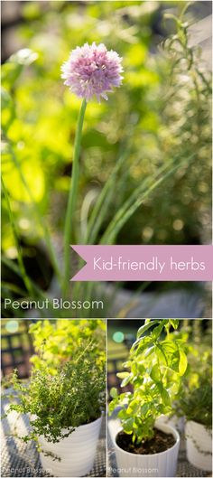 Kid-friendly herb recipes from a child's potted garden *great list of EASY ideas