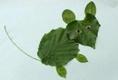 Eco-Gites of Lenault: Animal Leaf Pictures