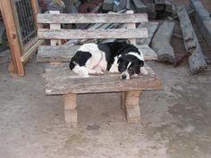 Dog tired.
