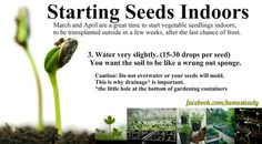 Start seeds. Get more great information and tips about starting tomato seeds at http://www.tomatodirt.com/grow-tomatoes-from-seeds.html.