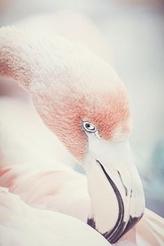 Demure Flamingo by CandidHams Creatives on Creative Market