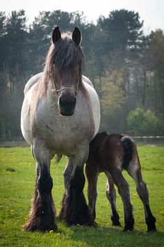 Big Mama! Draft horse mare and foal