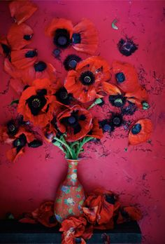 plant, poppi perfect, color, flower power, favorit poppi