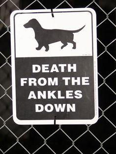 love my wiener dogs!