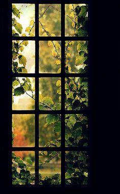 castl, secret gardens, dream, vine, leav, front doors, window panes, light, shop windows