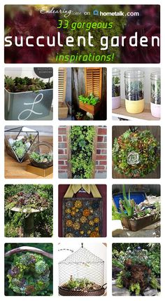 Succulent gardens is what everyone is talking about! Check these out!