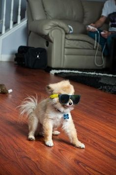 This Dog is too cool