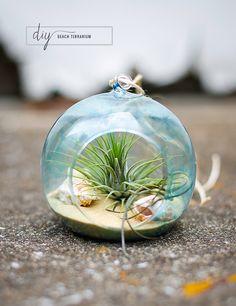 What an adorable beach terrarium for the kids!