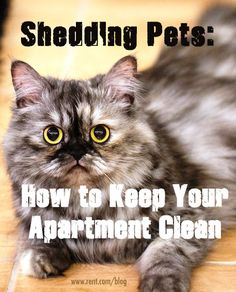 Your pets are adorable–-but let's be honest, shedding onto every piece of furniture in your apartment is not as cute. Here are some tips to fight shedding and keep your home clean. [Rent.com Blog] #pets #shedding #cleaning #apartment
