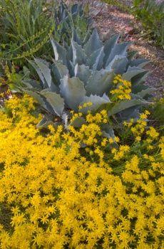 Arizona Garden Guide - 12 month guide to gardening in AZ, very helpful!