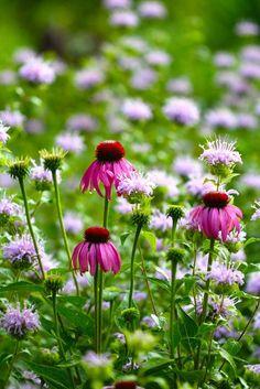 Top Ten Medicinal Herbs for the Garden-