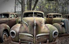 old cars rusted out in the garden