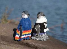 Penguins in sweaters...