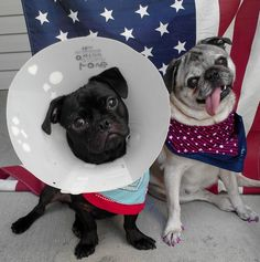 """I hate people. I hate traffic. I hate fireworks. I don't eat meat."" 