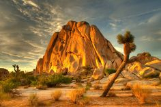 Joshua Tree National Park. This is very much worth the stop if you are ever driving from Vegas to Palm Springs.