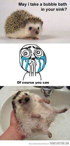 Give a Baby Hedgehog a Bubble bath