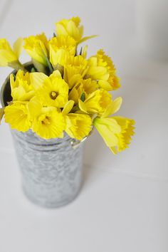 Bucket of sunny daffodils