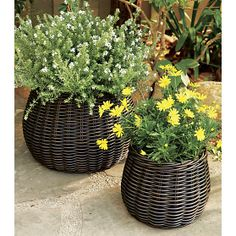 Basket Planters | Crate and Barrel