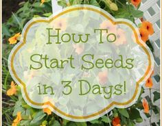 How To Start Seeds In 3 Days ~ Simple Gardening Tip - Mom 4 Real