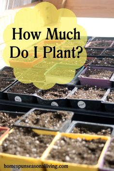 How Much Do I Plant?