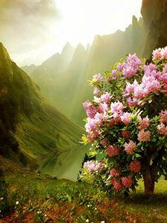Spring Blossoms, Scotland