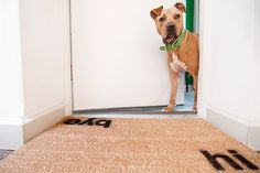 want this doormat @yellowbrickhome (pooch is pretty awesome too)