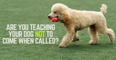 Are you teaching you