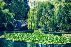 Locals know Beacon Hill Park is beautiful, but the world is taking note too. It was recently named one of the top three parks in Canada by TripAdvisor!