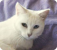 Alasandra, The Cats & Dogs: Blog the Change for Animals