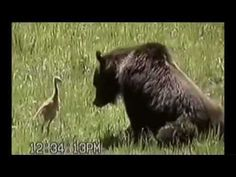 ★ Funny Animal Clips - America's Funniest Home Videos - Part 385