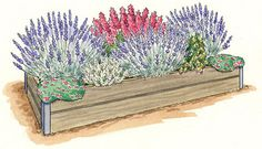 How to grow lavender in a wet climate