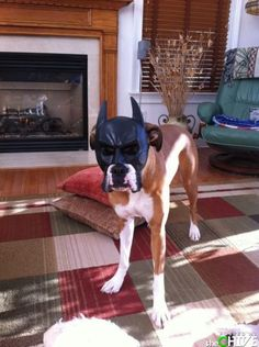 bat dog! #thechive