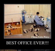 PANDAS BABY FREAKIN PANDAS!