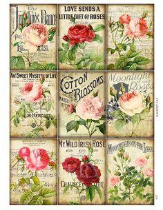 rose collage