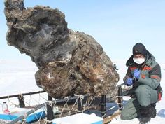 Jurassic Park moves one step closer? Russian scientists find woolly mammoth 'blood and muscle tissue' in Siberia