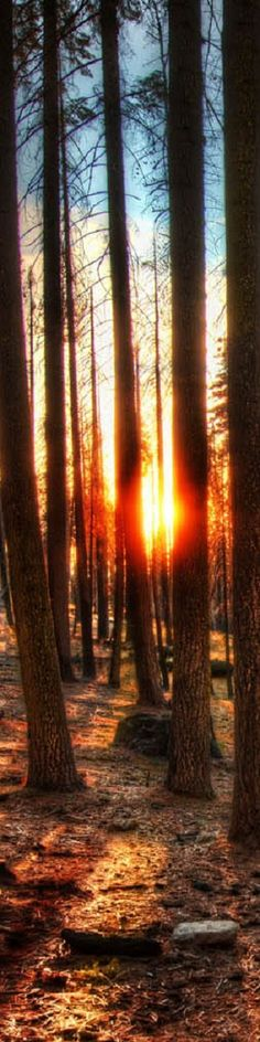 """The Woods at Sunset - from the Exhibition: """"Cropped for Pinterest"""" - photo from #treyratcliff Trey Ratcliff at www.StuckInCustoms.com"""