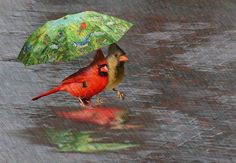 . little red, umbrellas, true colors, singing, wedding pictures, birds, rain, april showers, cardinals