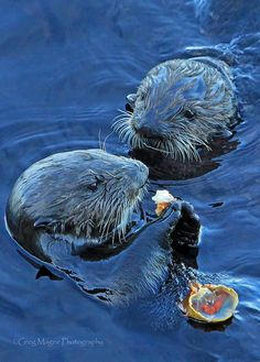 Otters - Snack Time