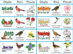 Free 3 page downloads {so cute} state cards with state flower and state bird.
