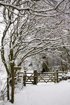 Path Through Winter Woods - Exeter, England