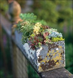 Diggin the re-purposed galvanized container...
